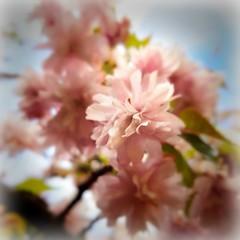 Siempre habr algo por lo que te diferencies (Miamy7) Tags: flowers naturaleza macro primavera arbol spring flor naturalezacautivadora macrounlimited