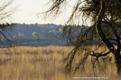 _TKF5752 (Tjeerdknierfotografie) Tags: landscape landschap hogeveluwe nphogeveluwe npdhv