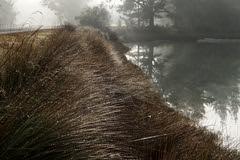 Mist and sparkle 1 (duncanmc42) Tags: newzealand mist water grass misty bokeh foggy scenic nelson olympus estuary dew southisland inlet roadside magical dewy rabbitisland em5 waimeainlet microfourthirds duncancunningham duncanmc42