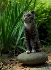 Gali (rootcrop54) Tags: sculpture art wool felted cat miniature handmade ooak tabby needle needlefelting gali needlefelted