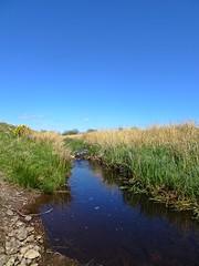Muirhead (Bricheno) Tags: scotland escocia burn szkocja schottland scozia renfrewshire cosse howwood whittliemuir  esccia   bricheno scoia