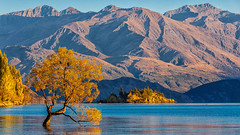 That Wanaka Tree (djryan78) Tags: morning travel autumn newzealand mountain lake mountains tree fall water canon landscape outdoor willow southisland otago dslr wanaka 70200 lakewanaka 6d 70200f4l canon6d queenstownlakes thatwanakatree