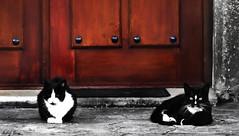 Gatos guardianes // Guardian Cats (Cazadora de Fotos) Tags: street wild cats blanco photography village negro pueblo free gatos mascotas negros fotografa salvajes villaje