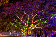 These giant trees have me in complete awe (HaydenDavies1) Tags: lights exposure vivid circularquay quay circular vividlights vividsydney vivid2016