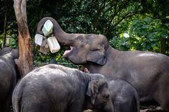 Elephant Play Time