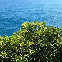 Foto-18-06-16-17-08-16 (fdpdesign) Tags: camogli portofino escursionismo 2016 liguria italia italy apple iphone mare monti sentieri sea instagram