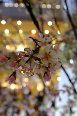 Crystal Cherryblossom (Zengame) Tags: 35mm cherry landscape blossom  swarovski yokohama  landmarktower   x100  finepixx100