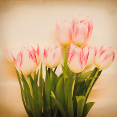 Tulips (RicHampton) Tags: pink flowers light flower green texture vintage tulips stems valentines 28 squarecrop experimenting tamron90mm sonya580