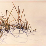 "<b>Winter Reeds</b><br/> David Prehm (1957?-) ""Winter Reeds"" Watercolor, n.d. LFAC #1997:08:28<a href=""http://farm8.static.flickr.com/7201/6852457251_1931efc34e_o.jpg"" title=""High res"">∝</a>"