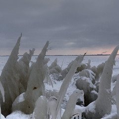 Our frozen reed along the IJsselmeer lake (Bn) Tags: christmas winter light sunset lake snow cold holland ice reed netherlands skyline iceage geotagged evening frozen rocks bevroren nederland greenhouse sphere planet oh powerplant avond dijk riet phragmites diemen dike flevoland ijsselmeer avondlicht molecule frozenlake kou ijs icefield absorption polarice icecold sfeer ijmeer winterinholland markermeer hummocks koude vriezen blueglacier icedrift hummock electriciteitscentrale driftice uitdam uitdammerdijk kruien ijsschotsen kruiendijs blueicecave klimaatveranderingen winterinthenetherlands ijsvlakte glacialage zoetwatermeer littleiceageruns eilandpampus ijskappen spectaculairbevroren ijmeerbevroren frozenlakeijmeer klimaatopaarde icedrifting blueicerocks geo:lon=5067267 geo:lat=52413457