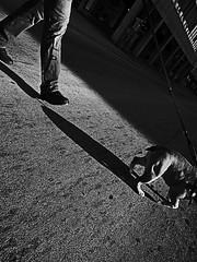 half man half dog (Tekapa walking around the city .....) Tags: street city streets photography photo photographer walk candid streetshots streetphotography photowalk streetshot flaneur streetphotographer streetshooting streetshooter cityphotography