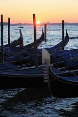 Venice 4002