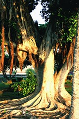 The Heart Of It All (belindah-Thank You!-500,000 Views Now) Tags: hearts hawaii roots maui banyantree