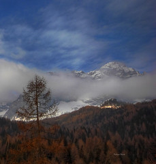 My beloved... mountains! (Robyn Hooz) Tags: morning trees alberi clouds montagne canon angle wide sigma neve dolomiti mattina passo 550d larici staulanza 1020hsmex