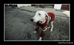 Dog in Red (Mingle Wang | Photography) Tags: red dog canon suzhou 5d 1635 china pingjiang