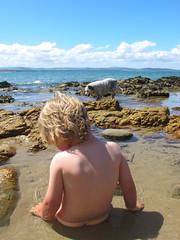 Water Babies.. (Sashjasu) Tags: boy dog beach canon seven tasmania mile rockpool g12