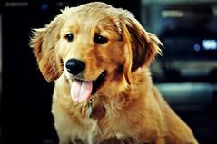 charl (Danger Unicorn) Tags: dog macro animal nikon d90 nikkor105mmf28gvrmicro