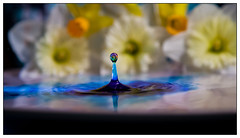 IMG_0365.jpg (Michael Greenley) Tags: macro reflection water canon frozen waterdrop drop waterdropmacro watermacro waterdropreflection canon5dmkii rainbowwater 5dmkii