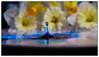 IMG_0365.jpg (Michael Greenley) Tags: macro reflection water canon frozen waterdrop drop waterdropmacro watermacro waterdropreflection canon5dmkii rainbowwater 5dmkii