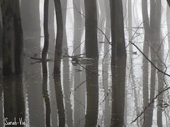 (Sarah-Vie) Tags: tree fog eau rivière arbres arbre printemps brouillard mystique débordement