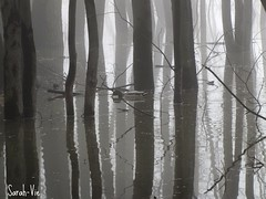 (Sarah-Vie) Tags: tree fog eau rivire arbres arbre printemps brouillard mystique dbordement
