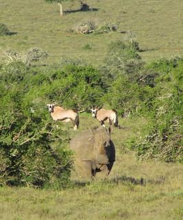 South Africa Hunting Safari - Eastern Cape 29