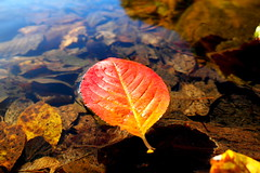 SAM_2516 (ninaskaret) Tags: autumn fall water oslo norway leaf