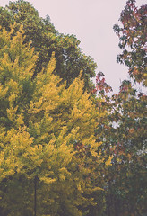 Autumn Session (Gonza.M) Tags: autumn trees tree nature colors yellow natural leafs