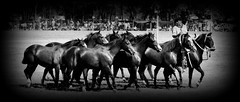 La tropilla de picazos (Eduardo Amorim) Tags: horses horse southamerica argentina criollo caballo cheval caballos cavalos pferde herd cavalli cavallo cavalo gauchos pferd ayacucho chevaux gaucho cavall  amricadosul gacho amriquedusud provinciadebuenosaires  gachos  sudamrica suramrica amricadelsur sdamerika crioulo caballoscriollos criollos  tropillas buenosairesprovince americadelsud tropilhas tropilla crioulos cavalocrioulo americameridionale tropilha caballocriollo eduardoamorim cavaloscrioulos