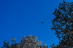 _DSC3654 (Knox Art Works) Tags: wild sky nature minnesota plane spring view distance springlake
