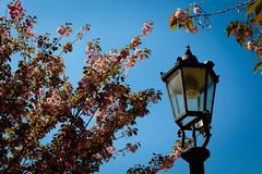 Enlighten the Blossoms (Lord Demise) Tags: blue summer sky sun lamp canon germany deutschland lampe sommer blossoms himmel lamppost blau laterne sonne koblenz rheinlandpfalz blten ehrenbreitstein rhinelandpalatinate 70d