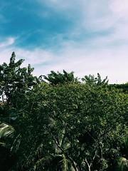(jerrytanuwijaya) Tags: blue light sky sun sunlight tree nature beautiful natural clear