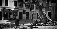 Not worried about the tree (Just Ard) Tags: street venice people blackandwhite bw woman tree blancoynegro monochrome bench person photography 50mm reading mono newspaper nikon sitting noiretblanc zwartwit candid sit d750 unposed seated  biancoenero schwarzundweis justard