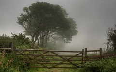 Silent Echoes (Ollie_57.. on/off) Tags: wood uk flowers trees nature field june misty fog canon landscape spring flora gate devon 7d wildflower hdr atmospheric foxgloves 2016 shaldon ef24105mm labradorbay ollie57 hggt affinityphoto