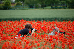cache cache (Bruno MATHIOT) Tags: red france flower green nature fleur canon french rouge eos europe outdoor vert photograph alsace poppies extrieur champ coquelicot photographe 55250 760d