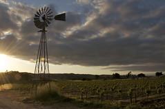 Whistling Wind, Rustling Vines (blueteeth) Tags: windmill rural landscape vineyard vines flare waterpump cloudscape lowsun aermotor
