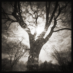 WPPD Tree # 2 (DRCPhoto) Tags: world 6x6 photography day pinhole 2016 wppd ondu lenslessphotography