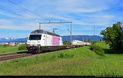 Re 465 017-2 Neyruz, 21.05.16 (rodsteve232) Tags: coop bls pinkpanther ros re465 0172 oensingen vufflenslaville railcare