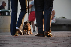 Having a Walk (lucasangarola) Tags: sunset shoe shoes walking walk streetphotography dog doggy cute relax couple puppy