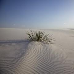 White Sands National Monument (na~) Tags: np usa us usnationalpark newmexico sand whitesand dunes whitesandsnationalmonument sunset