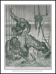 s052 4947 Buch Heft 3 Das Buch Fr Alle. Orang-Utan und Schipansen im berliner Aquarium. Holzstich von C. G. Specht nach Friedrich Specht um 1880. (Morton1905) Tags: 3 buch aquarium und die im stuttgart g c familie von s um orangutan das 55 der specht berliner hermann redaktion alle zur 1880 friedrich nach fr jedermann heft druck 1896 s052  unterhaltung verlag gegenwart holzstich chronik 4947 schnlein belehrung monatsschrift illustrirte familienzeitung schipansen