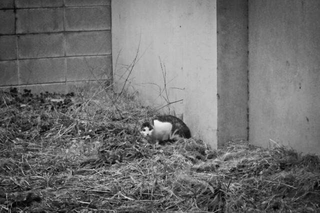 Today's Cat@2012-02-24