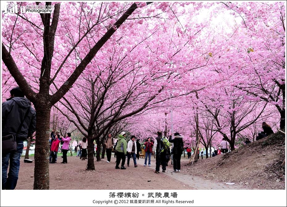 Wuling_0185