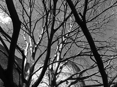 POV (SS) Tags: above city light shadow sky bw italy white black tree nature weather silhouette clouds composition contrast photography mood shadows view angle pov walk branches details year perspective scenic silhouettes diagonal framing bianco nero tone ambience lazio iphone noseup natureselegantshots