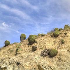 Surrealismo (Plumerio Pipichas) Tags: cactus mxico mexico surrealism barranca hidalgo mexiko cactii slopes diversidad surrealismo ladera cactceas metztitlan rido aridlandscape plumeriopipichas paisajerido biznagas