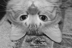 !     ~  (Sarah Altamimi) Tags: white black sarah cat