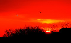 Red Burning Sun Rise - Birds Flying - #10022012-IMG_0742aa (photographic Collection) Tags: red sun birds sunrise canon ma rebel golden quincy fly us flying photographic collection burning hour 10th rays 365 feb rise 2012 burningfire sarma firy 550d kalluri 2ti mygearandme photographiccollection bheemeswara bkalluri bheemeswarasarmakalluri goldewnhour