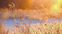 Reeds in the morning sun (Salmando) Tags: morning blue light orange sun snow reeds nikon jyrki winterbeauty kotka salmi d7000 nikonflickrawardgold