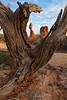 Juniper Tree Framing Balanced Rock II, Utah (bretedge) Tags: sunset landscapes unitedstates northamerica archesnationalpark scenics balancedrock lasalmountains coloradoplateau bretedge