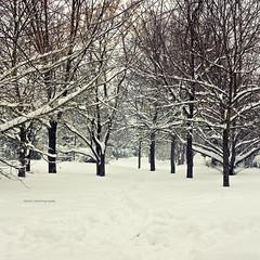 .enchanted forest (]babi]) Tags: park trees winter panorama parco snow cold ice nature alberi fairytale forest landscape frozen soft path pastel branches neve dreamy sentiero inverno freddo paesaggio rami enchantedforest bosco boscoincantato